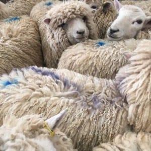 Le boeuf et l'agneau britannique