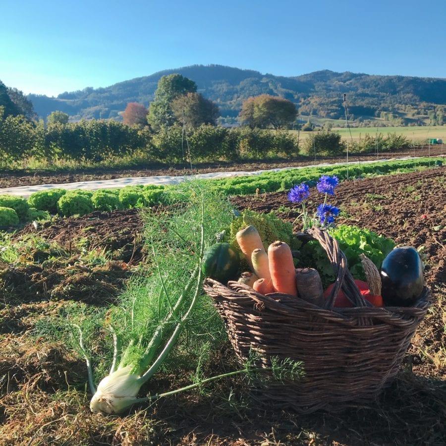 5 bonnes raisons de passer ses vacances en Champsaur Valgaudemar